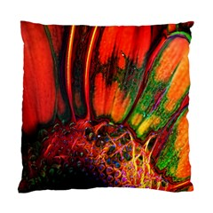 Abstract Of An Orange Gerbera Daisy Cushion Case (two Sided)  by bloomingvinedesign
