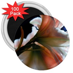 Amaryllis in The Light 3  Button Magnet (100 pack) by bloomingvinedesign