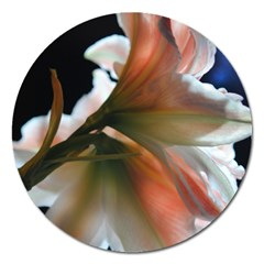 Amaryllis In The Light Magnet 5  (round) by bloomingvinedesign