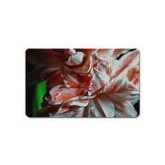 Amaryllis Double Bloom Magnet (name Card) by bloomingvinedesign
