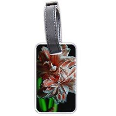 Amaryllis Double Bloom Luggage Tag (one Side) by bloomingvinedesign