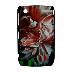 Amaryllis Double Bloom BlackBerry Curve 8520 9300 Hardshell Case  by bloomingvinedesign