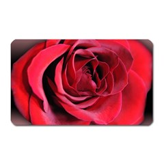 An Open Rose Magnet (rectangular) by bloomingvinedesign