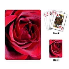 An Open Rose Playing Cards Single Design by bloomingvinedesign