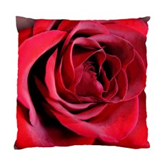 An Open Rose Cushion Case (single Sided)  by bloomingvinedesign