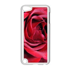 An Open Rose Apple Ipod Touch 5 Case (white)