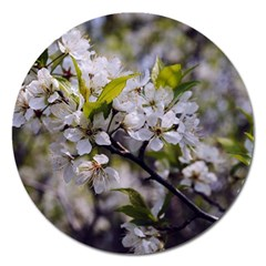 Apple Blossoms Magnet 5  (round) by bloomingvinedesign