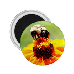 Bee On A Flower 2 25  Button Magnet by bloomingvinedesign