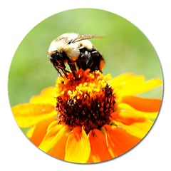 Bee On A Flower Magnet 5  (round) by bloomingvinedesign