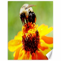 Bee On A Flower Canvas 12  X 16  (unframed)