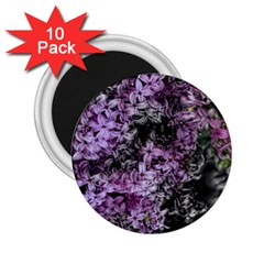 Lilacs Fade To Black And White 2 25  Button Magnet (10 Pack) by bloomingvinedesign