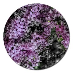 Lilacs Fade To Black And White Magnet 5  (round) by bloomingvinedesign