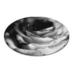 Light Black And White Rose Magnet (oval) by bloomingvinedesign