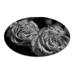 Black And White Tea Roses Magnet (oval) by bloomingvinedesign