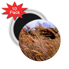 Blowing Prairie Grass 2 25  Button Magnet (10 Pack) by bloomingvinedesign
