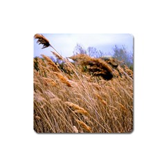 Blowing Prairie Grass Magnet (square) by bloomingvinedesign