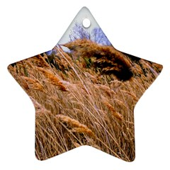 Blowing Prairie Grass Star Ornament (two Sides) by bloomingvinedesign