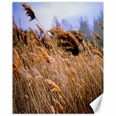 Blowing Prairie Grass Canvas 11  X 14  (unframed) by bloomingvinedesign