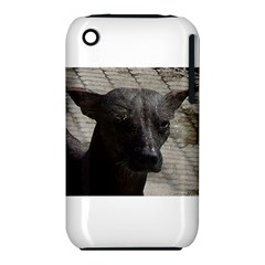 mexican hairless / Xoloitzcuintle Apple iPhone 3G/3GS Hardshell Case (PC+Silicone) by TailWags