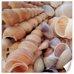 Seashells 3000 4000 Canvas 16  X 16  (unframed) by yoursparklingshop