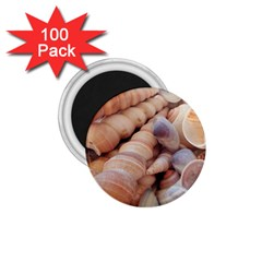 Sea Shells 1 75  Button Magnet (100 Pack) by yoursparklingshop