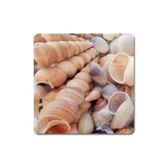 Sea Shells Magnet (square)