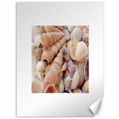 Sea Shells Canvas 36  X 48  (unframed)