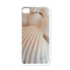 Sunny White Seashells Apple Iphone 4 Case (white)