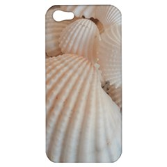 Sunny White Seashells Apple Iphone 5 Hardshell Case