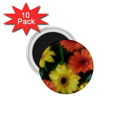 Orange Yellow Daisy Flowers Gerbera 1 75  Button Magnet (10 Pack)