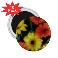 Orange Yellow Daisy Flowers Gerbera 2 25  Button Magnet (10 Pack)