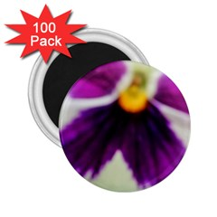 Inside Purple White Violet Flower 2 25  Button Magnet (100 Pack)