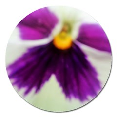 Inside Purple White Violet Flower Magnet 5  (round)