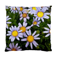 Yellow White Daisy Flowers Cushion Case (two Sided)
