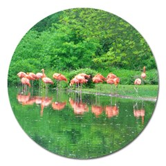 Flamingo Birds At Lake Magnet 5  (round) by yoursparklingshop