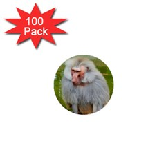 Grey Monkey Macaque 1  Mini Button (100 Pack) by yoursparklingshop