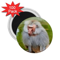 Grey Monkey Macaque 2 25  Button Magnet (100 Pack) by yoursparklingshop