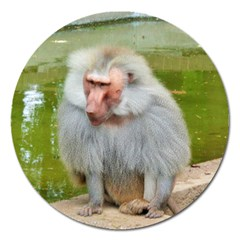 Grey Monkey Macaque Magnet 5  (round) by yoursparklingshop