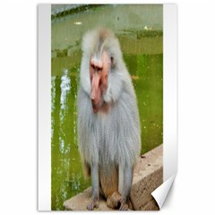 Grey Monkey Macaque Canvas 24  X 36  (unframed)