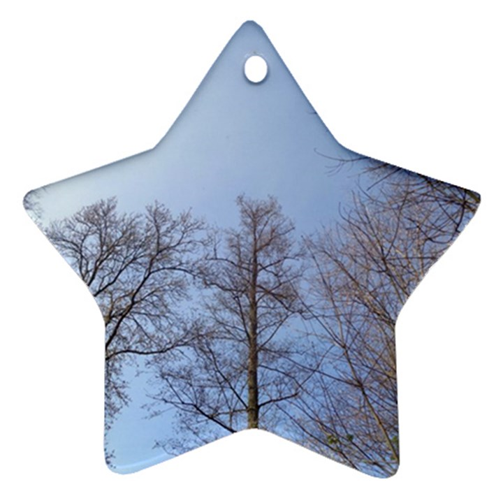 Large Trees in Sky Star Ornament