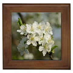 Spring Flowers Framed Ceramic Tile by anstey