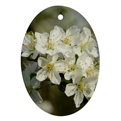 Spring Flowers Oval Ornament by anstey