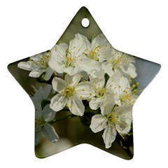 Spring Flowers Star Ornament by anstey