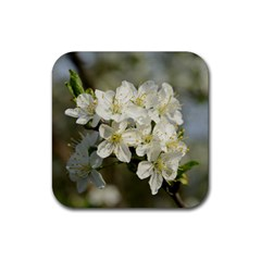 Spring Flowers Drink Coasters 4 Pack (square) by anstey
