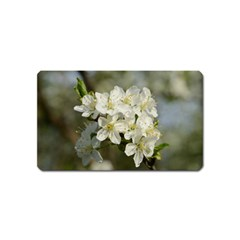 Spring Flowers Magnet (name Card) by anstey