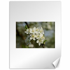 Spring Flowers Canvas 36  X 48  (unframed) by anstey