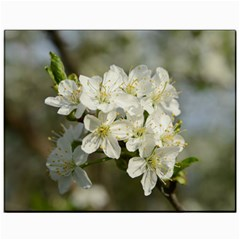 Spring Flowers Canvas 11  X 14  (unframed) by anstey