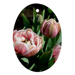 Tulips Oval Ornament by anstey