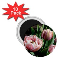 Tulips 1 75  Button Magnet (10 Pack) by anstey