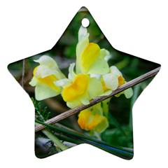 Linaria Star Ornament by ansteybeta